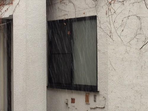 雪降ってるけど積もってない。夜は積もったのかもしれないけど
