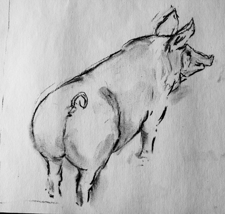 France, drawing/pig