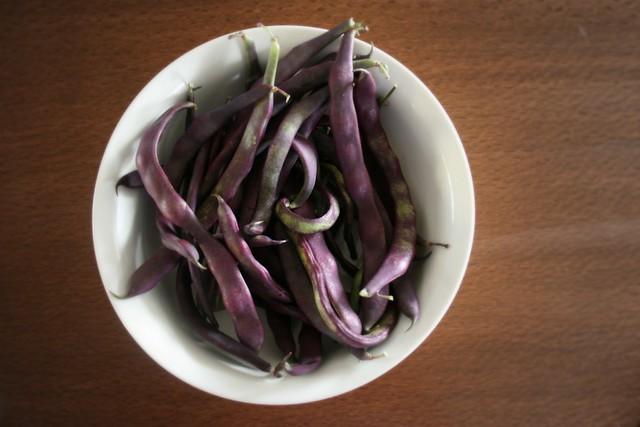 Purple bean harvest
