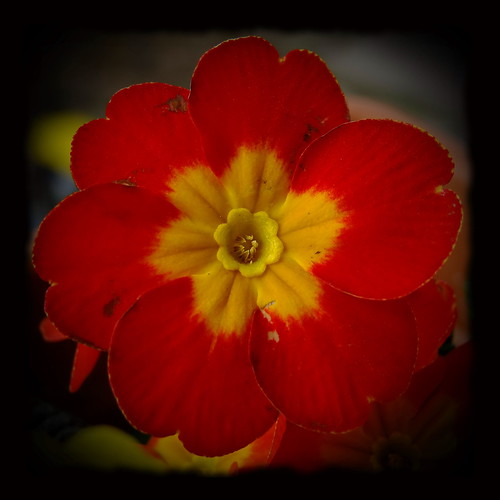 Thursday Flower 08.03.2012 by Harald52