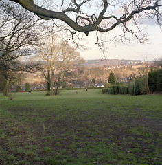 Bingham Park View