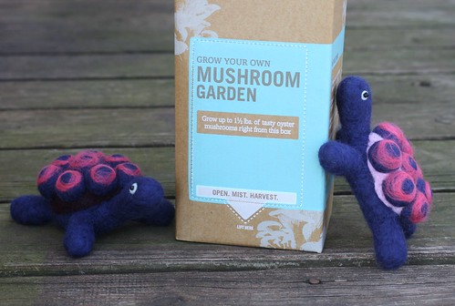 DIY Oyster Mushrooms