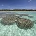 010_Massi di corallo in laguna