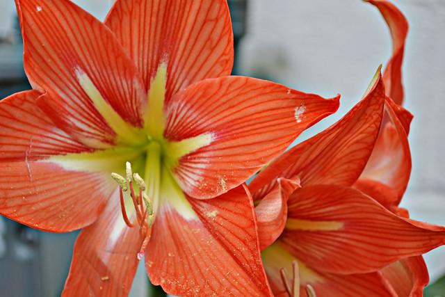 lovely flowers 1