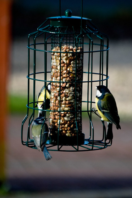 170312_ tits at the feeder no3
