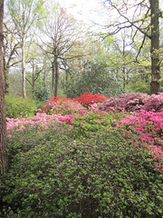 yard(0.0), azalea(0.0), blossom(1.0), woodland(1.0), shrub(1.0), flower(1.0), tree(1.0), plant(1.0), flora(1.0),
