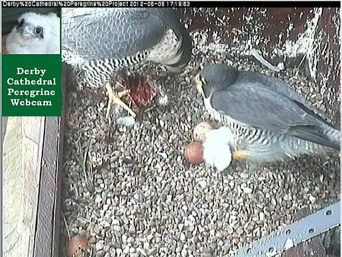 DCPP  05 05 2012  at 17 21 Tiercel ousted