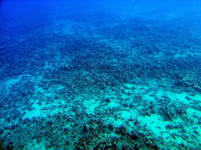 Pacific ocean floor the floor of the pacific ocean seen for Ocean ground