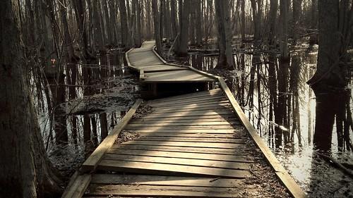 Take a walk on the boardwalk... by kim/ber
