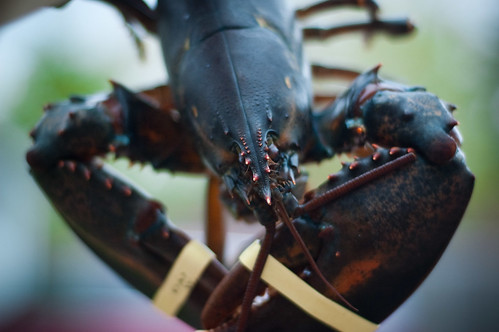 How to make Lobster, mmmm.