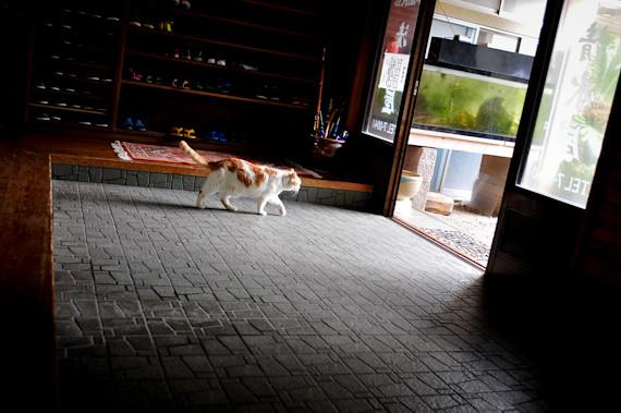 20120428-_DSC4623Shikinecat