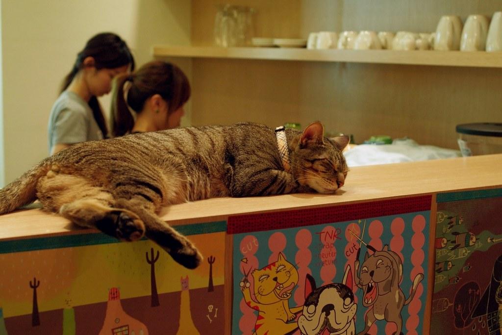 再訪貓‧旅行輕食咖啡 之 綠茶店長回來了
