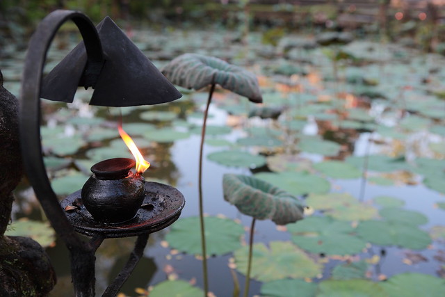 A Burning Lamp & Lotus Leaves