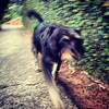 Walking Joe #dog #cachorro #viralata #mutt #serranegra #saopaulo