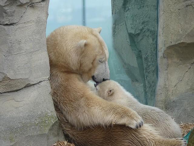 Valeska & Lili, Zoo am Meer