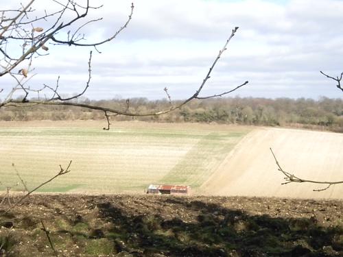 Barn and field