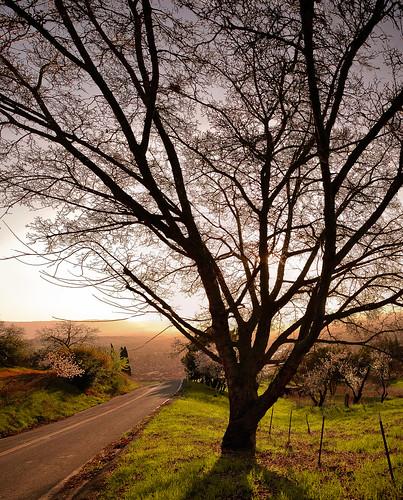 sunset tree silhouette treesilhouette nikon d70 tokina tokina35mm