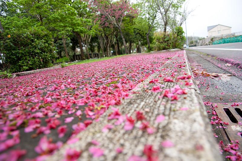 新社-櫻木花道