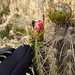 Spidey checking out the flower and again getting cactus spines in him.... Valle de la Luna near La Paz, Bolivia 28FEB12