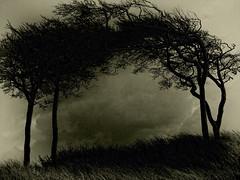[フリー画像素材] 自然風景, 樹木, 草原, モノクロ, 風景 - デンマーク ID:201203060400