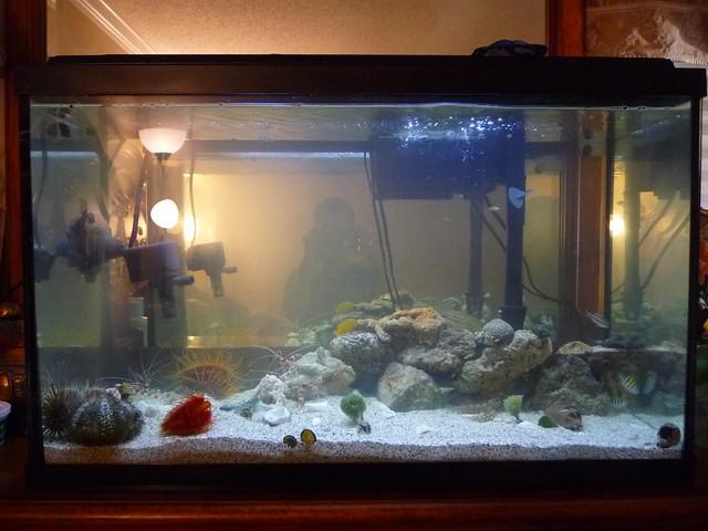 29 gallon saltwater fish tank Flickr - Photo Sharing!
