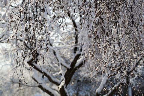 winter1-0312