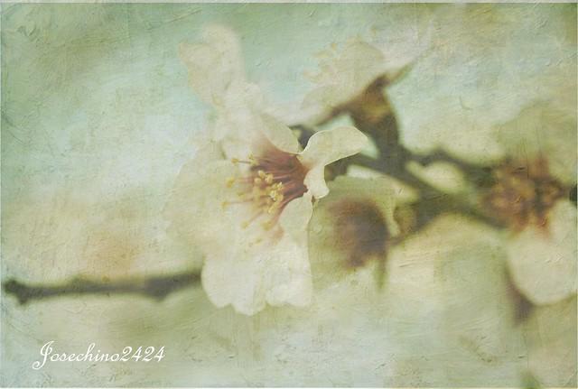 Primavera texturada