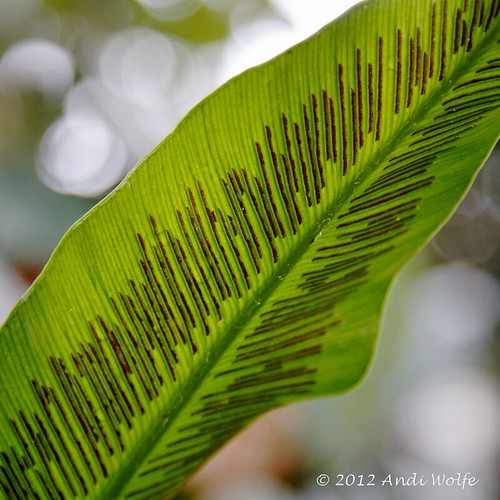 Fern detail by andiwolfe
