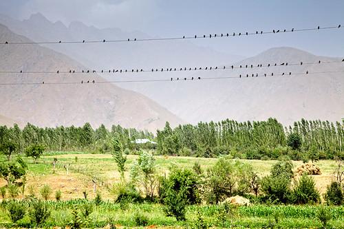 trees tree nature field fence places tajikistan hay agriculture rasht tjk gharm