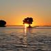 008_Mangrovia al tramonto