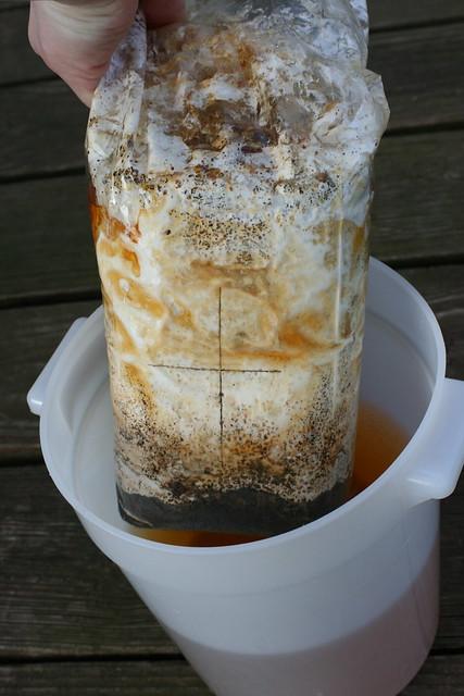 DIY Oyster Mushroom Kit - 24 Hour Soak