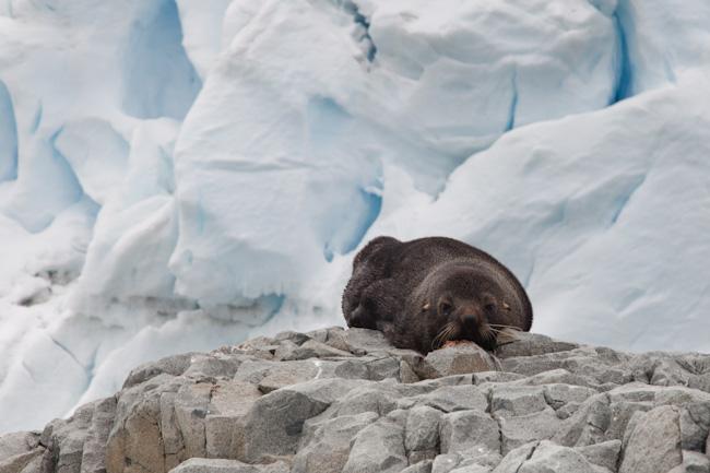 antarctica-blog-91