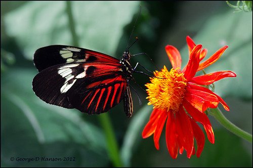 """Butterfly and Flower""  (click ""L"")"