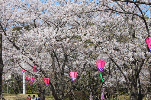 四万十市(中村)為松公園の800本の桜|高知県|2012.4.1