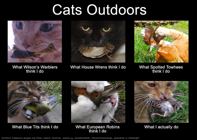 Cats Outdoors (original)