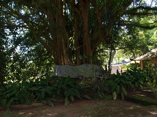 Бали, дерево с тряпочкой - значит живет дух