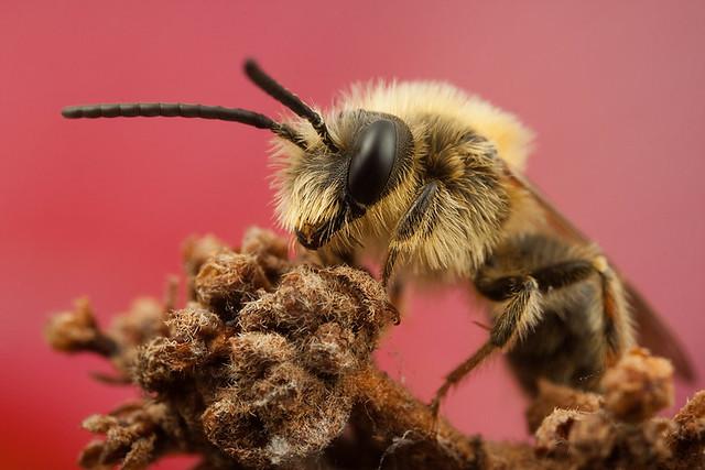 Miner Bee 8