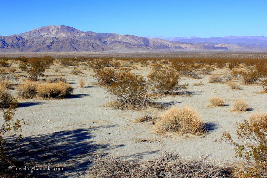 Desert Landscapes, Joshua Tree NP
