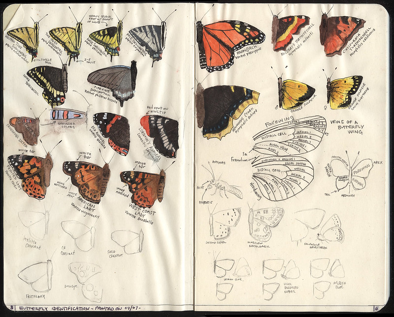 Butterfly Field Guide
