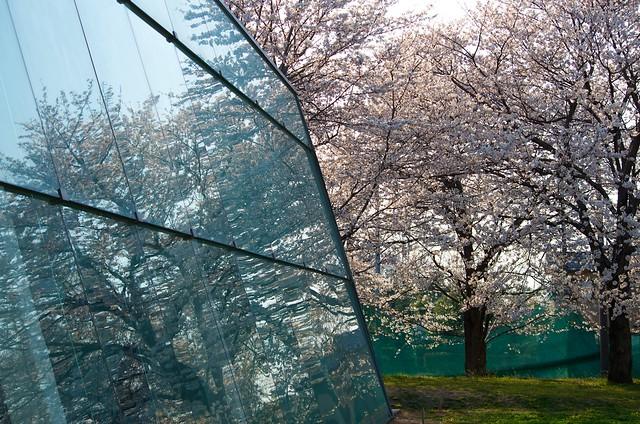 日本工業大学キャンパスの春