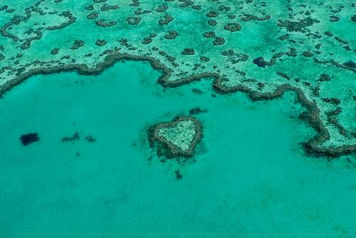 Heart shaped Reef