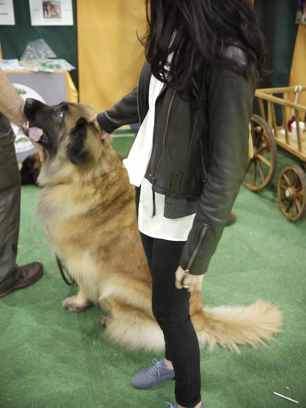 Dog Show 7