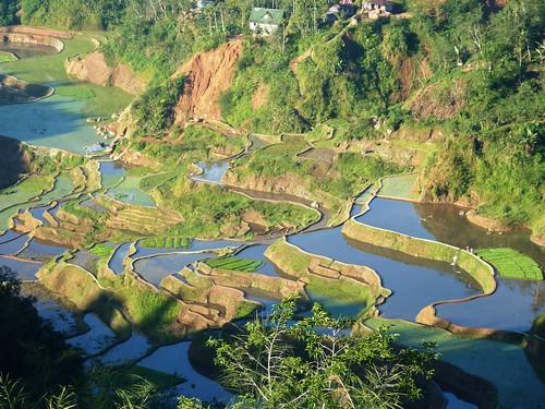 Luzon-Banaue (105)