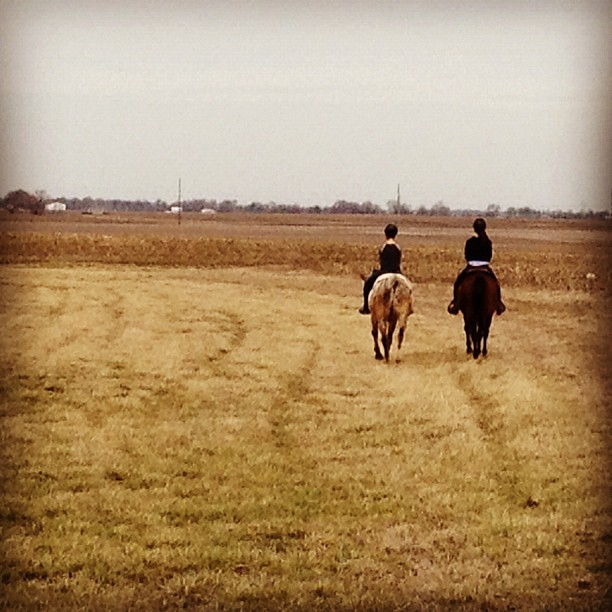 Trail Riding #twotakes #horses