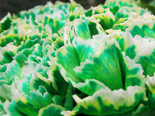 Green and White Flower Carnations