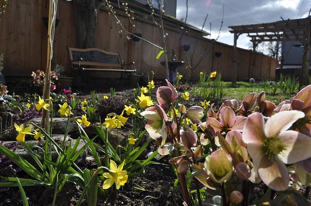 spring in the garden 026