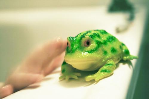 Animal bath