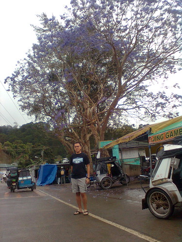 This is the first time I have seen a tree like this in Luzon