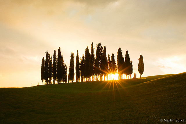 Val d'Orcia, Toscana #10 - Cypress Trees ~ Italy