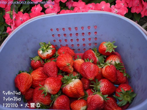 P1180098莓